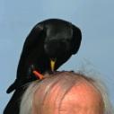 Vogelwurm